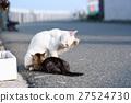 แมว,ความเป็นพ่อแม่,สถานที่ท่องเที่ยว 27524730