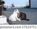 毛孩 貓 貓咪 27524731