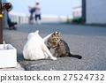 แมว,ความเป็นพ่อแม่,สถานที่ท่องเที่ยว 27524732