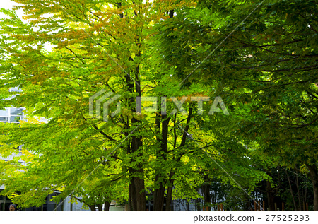 東京,上野公園,Tokyo, Ueno Park,東京、上野公園、 27525293