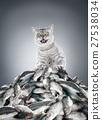 cat 27538034