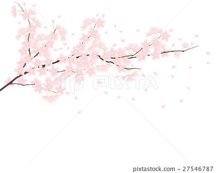 ต้นเชอร์รี่ Yoshino 27546787
