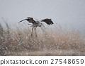 動物 野生鳥類 野鳥 27548659