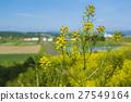 菜の花のある田舎の風景 27549164