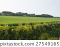 菜の花のある田舎の風景 27549165