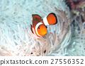 鱼 热带鱼 小丑鱼 27556352