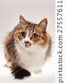 猫 猫咪 小猫 27557611