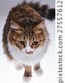猫 猫咪 小猫 27557612