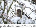 blackbird bird avian 27558538