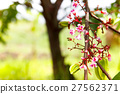 Blossom tiny pink flower, star fruit tree branch 27562371