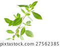 Green fresh sweet basil leafs isolated on white 27562385