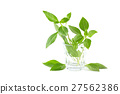 Green fresh sweet basil leafs isolated on white 27562386