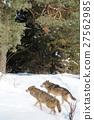 Wolfs 27562985