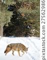 Wolf 27562986
