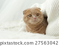 Cat comfortably settled on bed 27563042