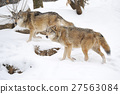 Wolf 27563084