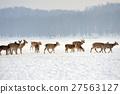 Deer 27563127