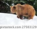 animal, animals, bear 27563129