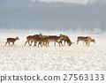 Young deer 27563133