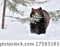 Bear 27563163