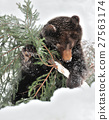 animal, animals, bear 27563174