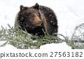 Bear in winter forest 27563182
