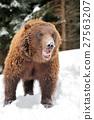 Bear 27563207