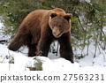 Bear in winter 27563231