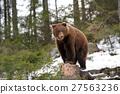 Bear in winter 27563236