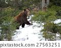 Bear in winter 27563251