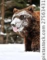 Bear 27563431