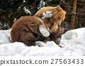 Bear in winter forest 27563433