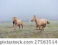 Horse 27563514