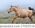 Horse 27563516