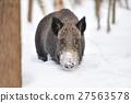 Wild boar 27563578