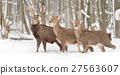 Deer 27563607