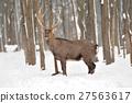 Deer 27563617