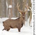 Deer 27563634