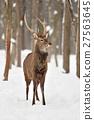 Deer 27563645