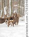 Young deer 27563648