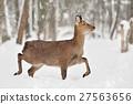 Deer 27563656