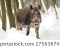 Wild boar 27563674