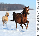 horse winter snow 27563728
