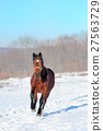 horse, snow, equine 27563729