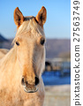 Horse 27563749