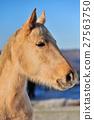 Horse 27563750