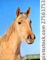 Horse 27563753