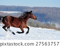 horse winter snow 27563757