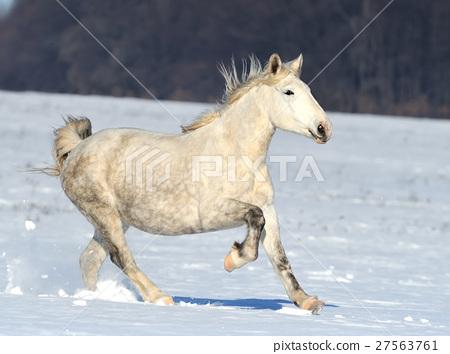 Horse 27563761