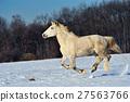 animal, equine, horse 27563766